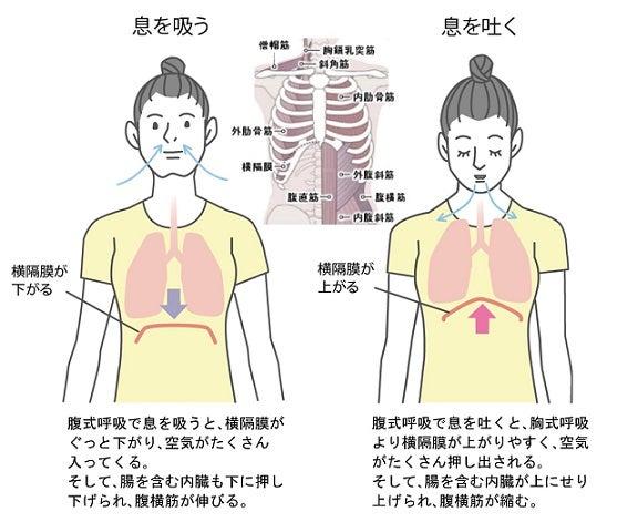 腹式呼吸で内臓ストレッチ