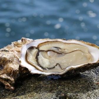 牡蠣、今はちょっと、、、