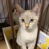 【里親募集】3匹メス 3ヶ月程度の子猫たちの画像