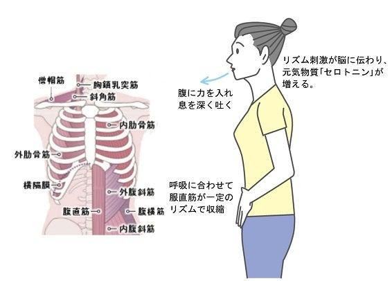 福祉呼吸・セロトニン