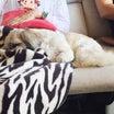 体調不良続きから救われたセラピー犬