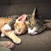 地域猫活動と啓発活動から少し前進し猫と人を繋ぐ『保護猫活動』を始めて1年と少し...の画像