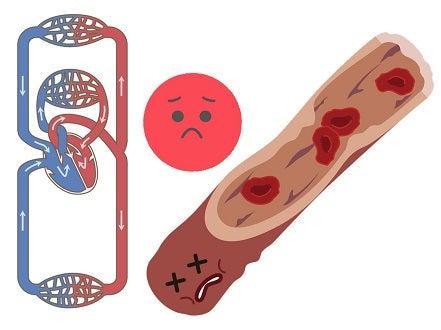 血液循環・老廃物・赤血球