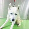 ハイシニアの中型犬引き出し、プーちゃん達のお知らせ。ご支援のご紹介ですの画像