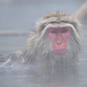 ★動物が発見した温泉の画像