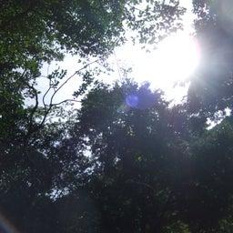 画像 五感で楽しむ自然観察 | 渥美半島☆自然感察ガイド の記事より 6つ目