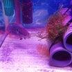 グリーンテラーの稚魚が酸欠(゚ω゚)強引な産卵隔離