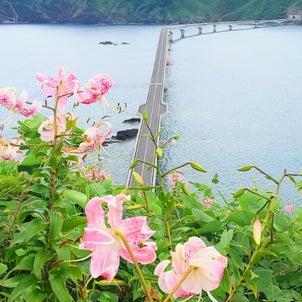 夢の架け橋がこしきを一つに結ぶ@下甑島の画像