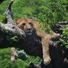 8月8日『ライオンズゲートが開く』ですって!!??の画像