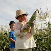 とうきび収穫体験&袋詰め放題の画像