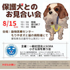 8月15日 もりやまお見合い会の参加犬が決定致しました!の画像