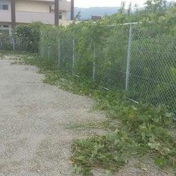 画像 福岡 便利屋駐車場の草刈り作業 の記事より 7つ目
