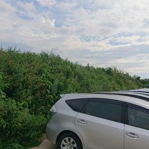福岡 便利屋駐車場の草刈り作業の画像