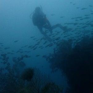 南島ボートでリフレッシュダイブの画像