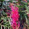 美しい花、でも名前は分かりません。の画像