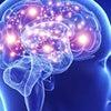 脳のキネシオロジーとは何に働きかけているのか?の画像