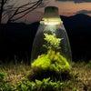 秋の「Mosslight 植物を育てるインテリア」の画像