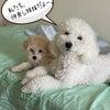子育てと犬育ては一緒。多頭飼いデビューで思うところあり!の画像