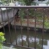<名古屋営業所のHドライバーさん>洪水は大丈夫でしたの画像