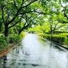 雨の日を楽しむの画像