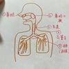 ★妊娠中の息苦しさと、コロナの肺炎との画像