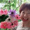 お彼岸にお供える菊の花!ひと手間で! 恐ろしく菊の花が元気に咲き秘密とは!