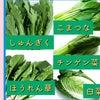 葉野菜、緑黄色野菜の体質別使い分け(ほうれん草、小松菜、春菊、チンゲン菜、白菜)の画像