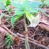 陣馬山から高尾山/8月に咲いていた花の画像