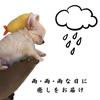 雨・雨・雨 な 日 に 癒 し を お 届 けの画像