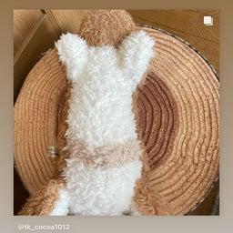 画像 オーダーぬいぐるみと愛兎ちゃんの2SHOT写真を、インスタで紹介下さってます☆(ここあちゃん) の記事より 4つ目
