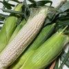北海道産の白いとうもろこしで『とうもろこしのスムージー』&『とうもろこしご飯』⭐︎の画像