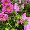 草花系の可愛い花の画像