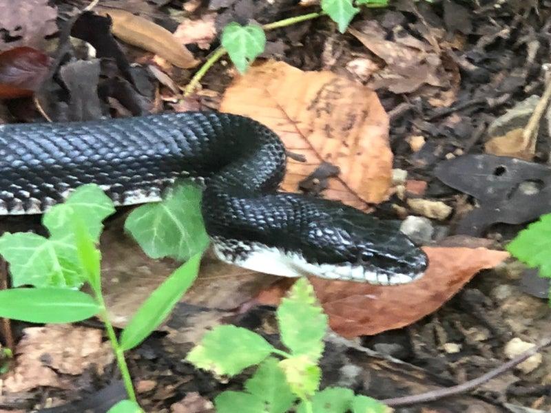 蛇 アメリカ生活 自然
