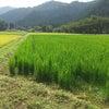 無肥料の定義って~の画像