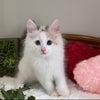 子猫ちゃん❤みんな決まりましたの画像