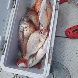画像 9月初の出港は鯛ラバ の記事より 3つ目