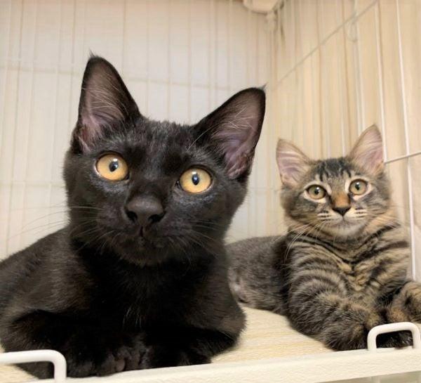 黒猫くろまめとキジトラ猫おせんの画像
