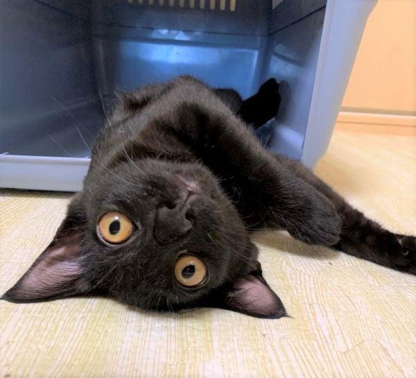 黒猫のくろまめくんの画像