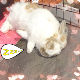 画像 ココたんのいつもの寝顔も、置いておきます♪(笑)/(*^x^*)\ の記事より 1つ目