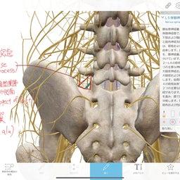 画像 腰痛の神経障害 L5神経根症状につい の記事より 7つ目