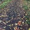 秋が来たの画像
