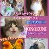 コザクラインコ&ウロコインコ&動物保険の事の画像