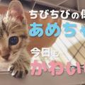 【今日のニュース⑦】2021年9月(9/23更新)