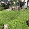 今年最後の芝刈りになるか? 芝生の管理の画像