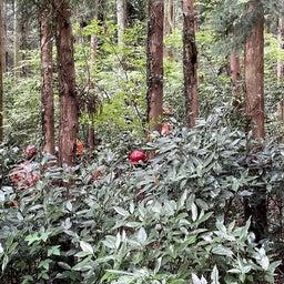 画像 森の健康診断をしました(^^♪ の記事より 2つ目