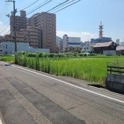 画像 契約お礼 Ulimo Garden 姫原1号 の記事より