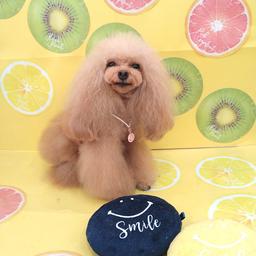 画像 毎週日曜日は全犬種の日☆9/12☆ の記事より 4つ目