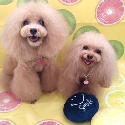 画像 毎週日曜日は全犬種の日☆9/12☆ の記事より 2つ目