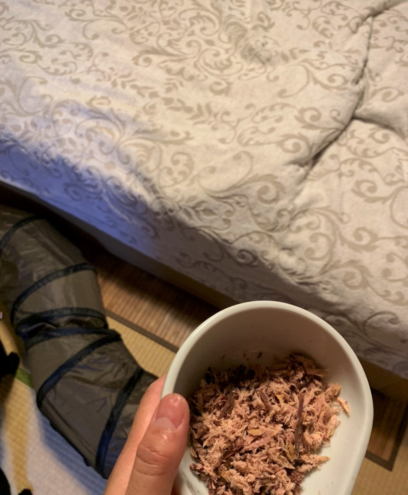 器に入った焼カツオとタオルケットの中の黒猫エルさんの画像