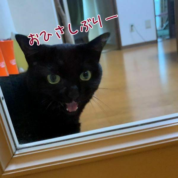 ドアまでお出迎えする黒猫ハンナさんの画像